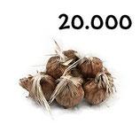 20 000 bolbos calibre 7-8