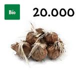 20 000 bolbos bio calibre 9-10