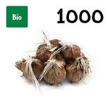 1000 bolbos bio calibre 9-10