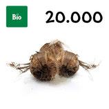 20 000 bolbos bio calibre 8-9