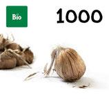 1000 bolbos bio calibre 10-11