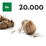 20 000 bolbos bio calibre 10-11