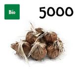 5000 bolbos bio calibre 9-10