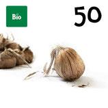 50 bolbos bio calibre 10-11