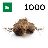 1 000 bolbos bio calibre 8-9