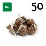 50 bolbos bio calibre 9-10