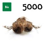 5 000 bolbos bio calibre 8-9