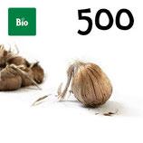 500 bolbos bio calibre 10-11