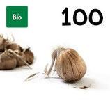 100 bolbos bio calibre 10-11