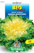 INDIVIA SCAROLA Batavia Maraîchère