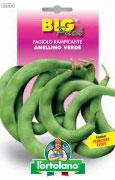 FAGIOLO rampicante Anellino Verde