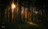 FineArt Print: Magic Forest