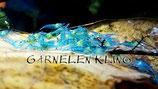 Blue Jelly Garnelen