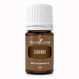 Caraway - Kümmel Ätherisches Öl - 5 ml