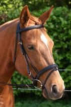 301 Basic Mini shet tot pony