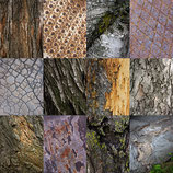 """SAVE 30% ON METAL PRINTS OF """"TREES AND MANMADE"""""""