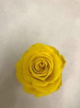 Crystal Drop yellow