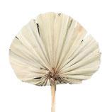 5 Stiele Palm Speer Natur