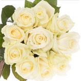 10 weiße Avalance Rosen