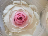 FLOWERBOX ROSA POINT