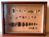Insekten im Schaukasten