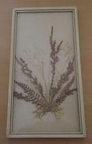 Bild mit gepressten Blumen - DDR - Nr. 11