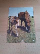 Ansichtskarte - Alte Tierbilder