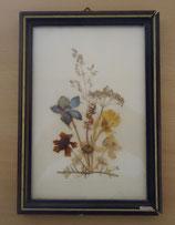 Bild mit gepressten Blumen - DDR - Nr. 5