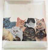 Fotoalbum - Motiv Katzen - Pets - Henzo