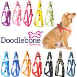 Doodlebone® Bold