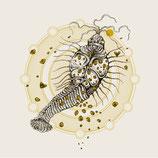 "SUMA / ULTRAPHALLUS - Split 7"""