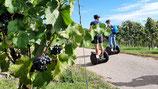 Segway-Tour Sinsheim Weinerlebnisführung