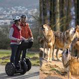 Incentive Halbtagesausflug Segway-Tour Wolfstour Bad Mergentheim Wildpark