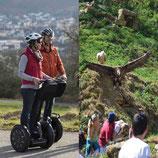 Segway-Tour Wildpark für Genießer