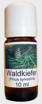 Waldkiefer BIO
