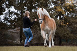 #lockdown-Online Coaching: Pferdetraining *** Kennlernangebot ***