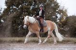 #lockdown-Online Coaching: Pferdetraining *** Standard ***