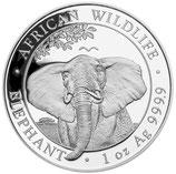 Somalia - Elefant 2021