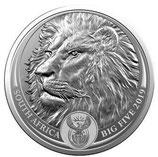 Südafrika - Löwe im Blister 2019