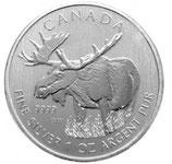 Kanada Wildlife Elch 2012