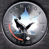 Kanada Wildtiere II 2015 Buckelwal