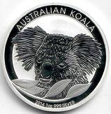 Australien - Koala 2014