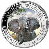 Somalia - Elefant 2021 coloriert