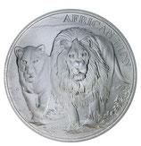 Kongo - Afrikanischer Löwe 2016