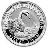 Australien - Schwan 2019