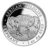 Somalia - Elefant 2020