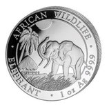 Somalia Elefant 2017