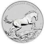Australien - Brumby 2021