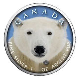 Kanada -Wildlife Serie IV 2019 Polarbär II koloriert