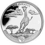 Kongo - Giraffe 2019